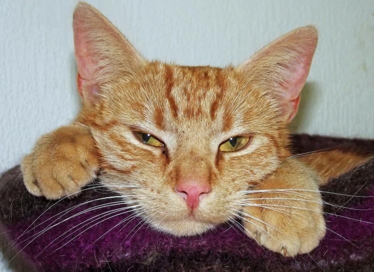 cat-203817_1920